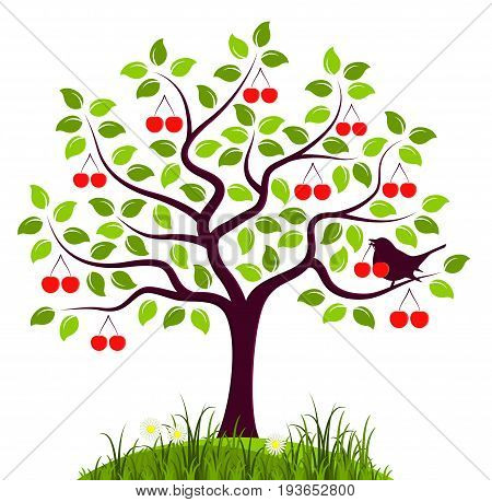 vector cherry tree and bird with cherry isolated on white background