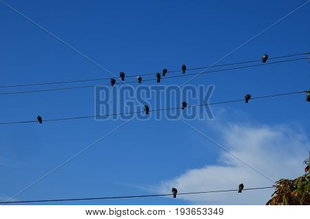 Group of Birds sitting on wires on against the sky like notes.