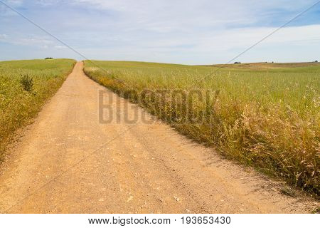 Farm Road In Vale Seco, Santiago Do Cacem