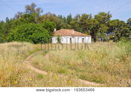 Farm house and trees in Vale Seco Santiago do Cacem Alentejo Portugal