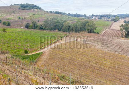 Vineyards In Winter, Vale Dos Vinhedos Valley