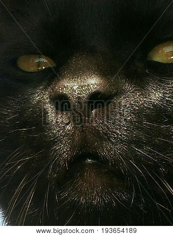 It seems the look of a great ape, but it is a cat