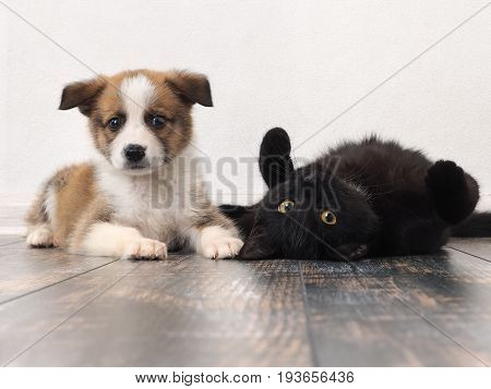 Funny puppy and cat on the floor