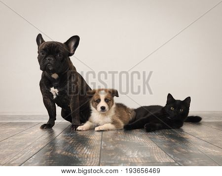 Adult dog puppy and cat on the floor