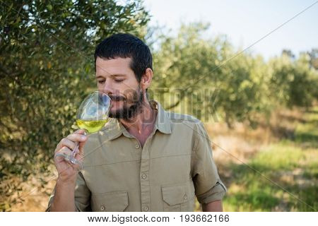 Farmer drinking glass of wine in olives factory on a sunny day