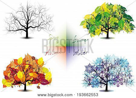 Four seasons trees. vector set of isolated seasons trees
