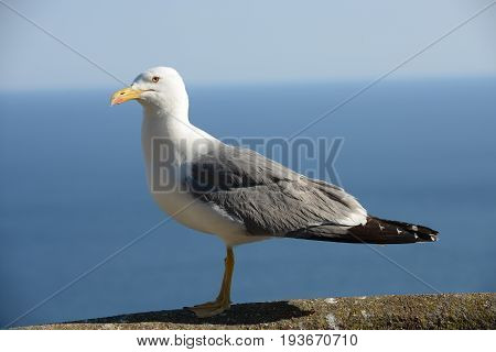 One seagull in the beach in Italy.