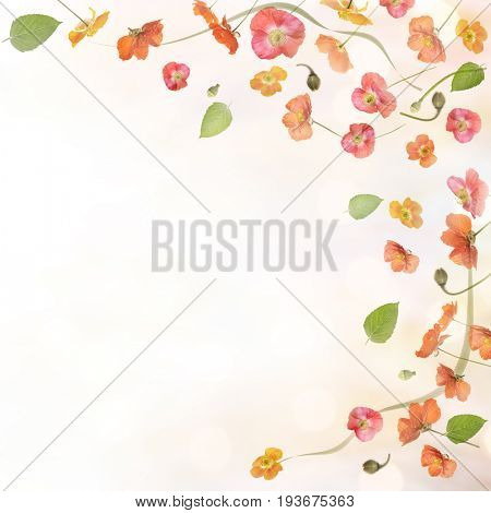 poppy flowers and leaves background
