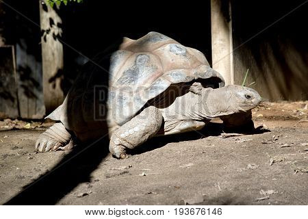 the tortoise is walking around the park