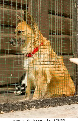 Unhappy homeless dog in dog shelter . Grid.
