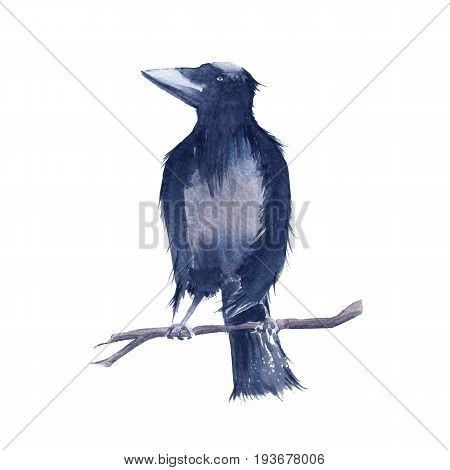 Black Raven. Isolated on white background. Watercolor illustration