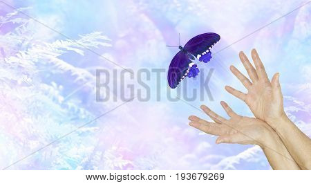 Spiritual Release -  female hands with a large  indigo colored butterfly moving away and up on an ethereal blue woodland background metaphor depicting a departing soul