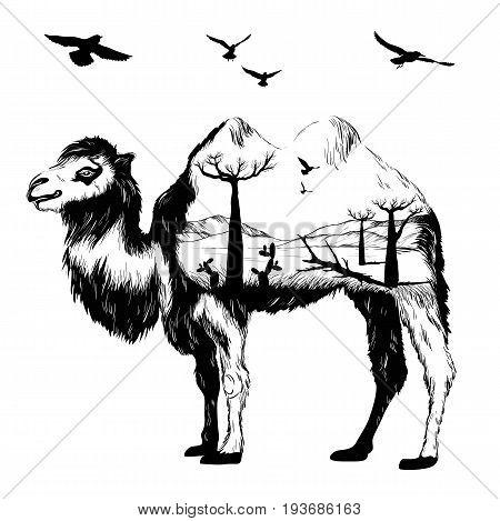 Vector Double exposure, Hand drawn Camel partrait for your design, wildlife concept