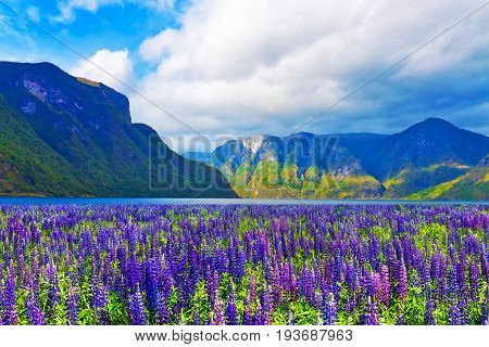 Scenic summer nature landscape of Scandinavian mountains and flower meadow in fjords of Norway