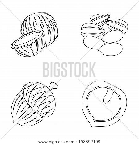 Coconut, acorn, sunflower seeds, manchueian walnut.Different kinds of nuts set collection icons in outline style vector symbol stock illustration .