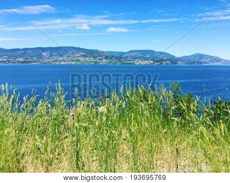 Tall green grass on hilltop overlooking lake and mountains with blue sky and scattered white clouds background.