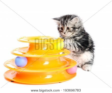 Gray little kitten playing with cats toy