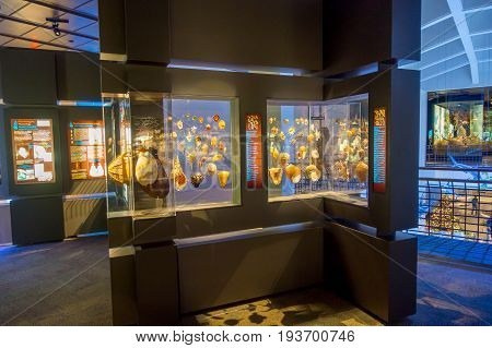 HOUSTON, USA - JANUARY 12, 2017: Seashell exposition, inside of the National Museum of Natural Science in Orlando Houston in USA.