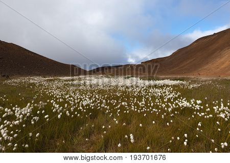 Viti Volcano Crater Amazing Landscape, Nothern Iceland. White Fluffy Cotton Flowers Inside Of The Vi