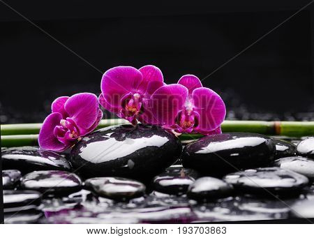 Red orchid blossom with wet black stones ,grove, on wet background