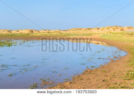 Swamp at the beach from the French Gironde