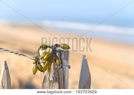 Beach at Atlantic ocean in France with seaweed