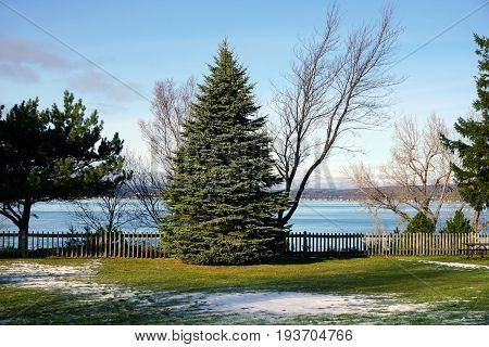 A blue spruce tree (Picea pungens) stands at the edge of Sunset Park in Petoskey, Michigan, during November.