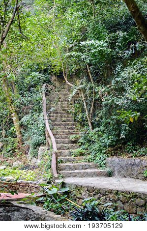 Stone Steps In The Jungle