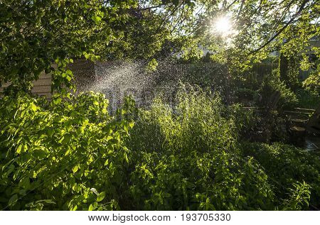 Backyard Garden is Being Watered with a Sprinkler