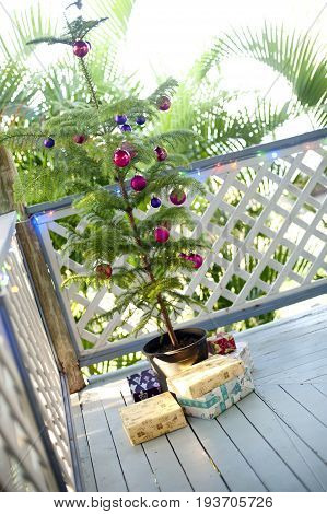 Natural pine Christmas tree in a pot decorated with red baubles standing on an outdoor wooden deck surrounded with gifts tilted angle view