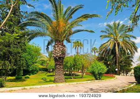 tropical garden with palm trees and sky