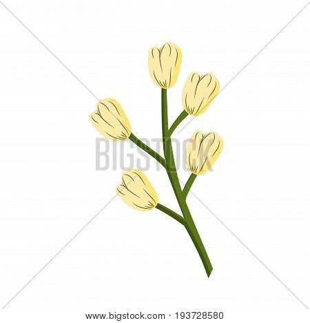 chamomile plant ingredient to condiment of food vector illustration