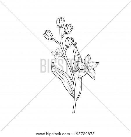 line chamomile plant ingredient to condiment of food vector illustration