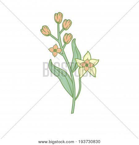 silhouette chamomile plant ingredient to condiment of food vector illustration