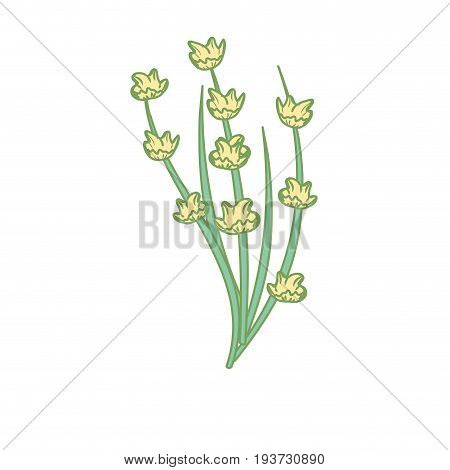 poppy plant ingredient to condiment of food vector illustration
