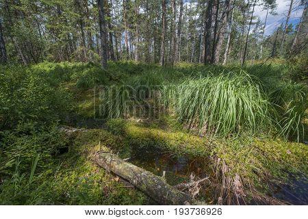 Peat bogs - National Nature Reserve - Cervene blatoTrebonsko Crech republic Europe