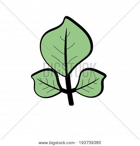 natural leaves botany of tropical plant vector illustration