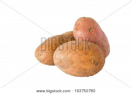 Three Ukrainian raw potatoes isolated on a white background.