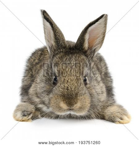 Little baby rabbit isolated on white background
