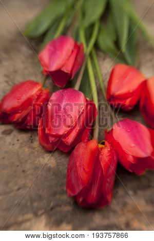 Red Tulips On Vintage Wooden Surface Background.