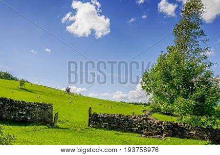 A gap in a dry stone wall under a blue sky with a windswept tree.
