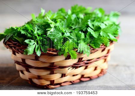 Fresh green parsley. Parsley sprigs in a wicker basket isolated on an old wooden background