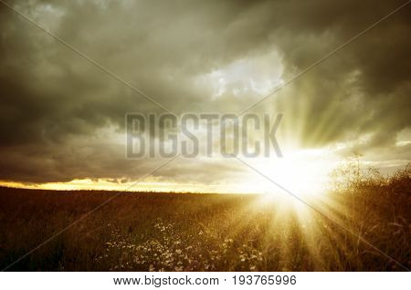 Dark clouds over dry yellow field with short wheat stems