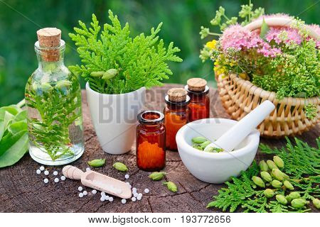 Bottles Of Homeopathic Globules. Thuja, Plantain, Healthy Infusion, Mortar And Basket Of Herbs. Home
