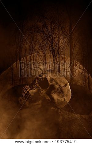 Human skull in haunted forest,Horror concept background