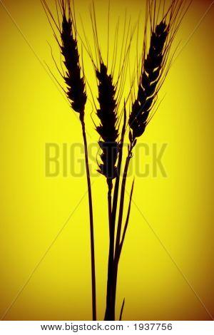 Grain Silhouette
