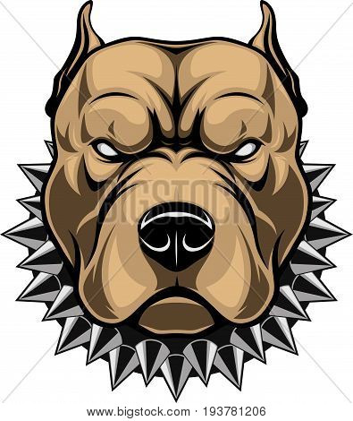 Vector illustration of a head of a spiteful pit bull, on a white background