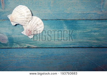 Two sea shells on old blue wooden background