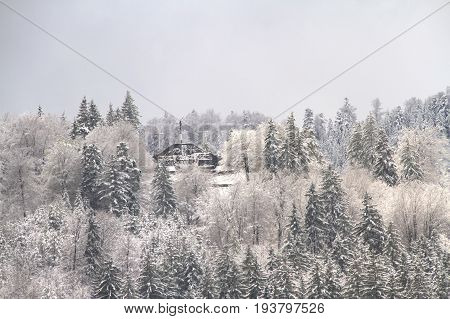 A forest on a hillside covered in snow with copy space