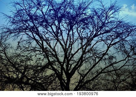 Late autumn forest tree branches without leaves, filtered and bule sky background.